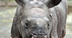 Baby rhino at Whipsnade