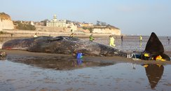 Whale washed up at Ramsgate
