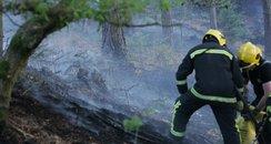 Woodland at Fleet after fire...