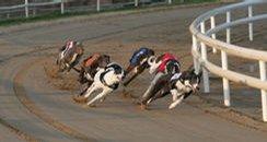 Peterborough Greyhounds 244