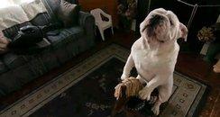 gabe the bulldog