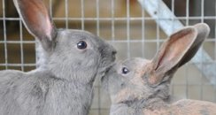 rescued rabbits