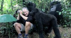 amazing encounter with wild gorillas