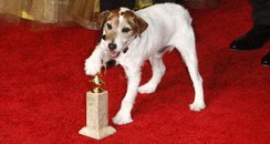 Uggie at the Golden Globes