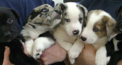 five abandoned puppies