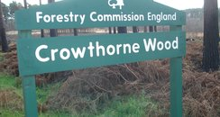 Crowthorne Forest