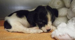 RSPCA Photo Of Bob The Abandoned Puppy