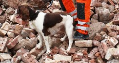 mickey spaniel, in rubble at newton abbot, sniffer