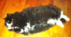 Lucy's Cat Princess
