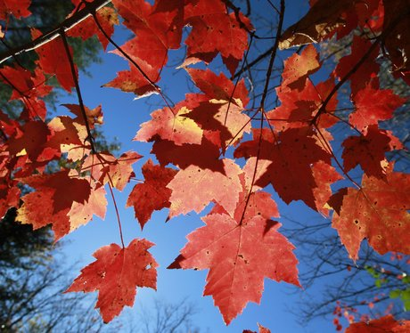 In Vermont the autumn leaves change colour and turn stunning shades of