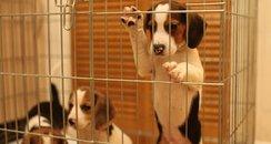 Dogs Portsmouth Anna Mazur