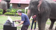 Peter the elephant pianist