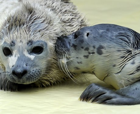 Two young seal pups sitting together