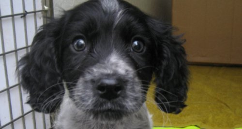 Heath the abandoned puppy in Petersfield