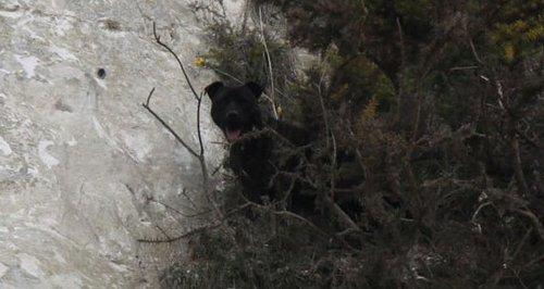 Paulsgrove dog rescue