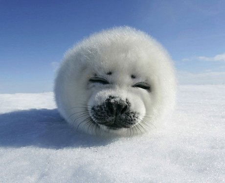 Cutest Pictures Of The Week - 25 February 2014