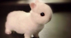 A white bunny rabbit