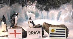 penguins predict world cup scores