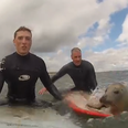 seal pup surfing