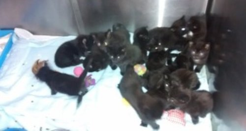 abandoned kittens Southampton