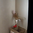 kitten jumping up