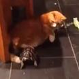 Cat and tortoise