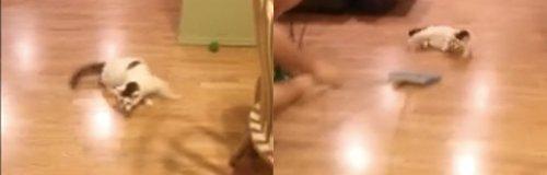 Cat and Broom Facebook Video