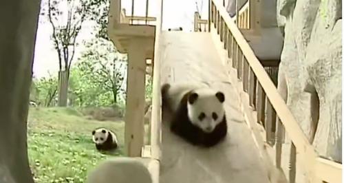 Panda Video Youtube