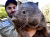 Wombat on Tinder