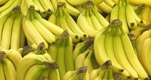 woman from stockport grew bananas in her garden