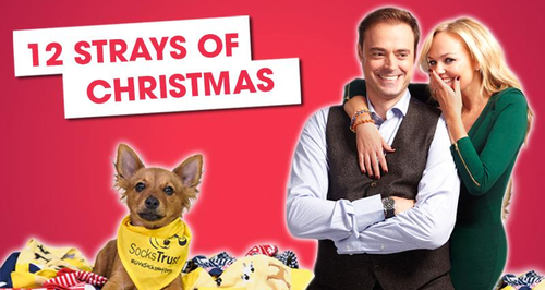 Jamie and Emma's 12 Strays Of Christmas