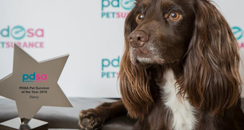 Darcy the dog named PDSA pet survivor