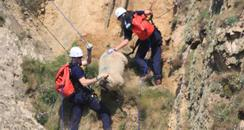 Sheep rescue, Croyde